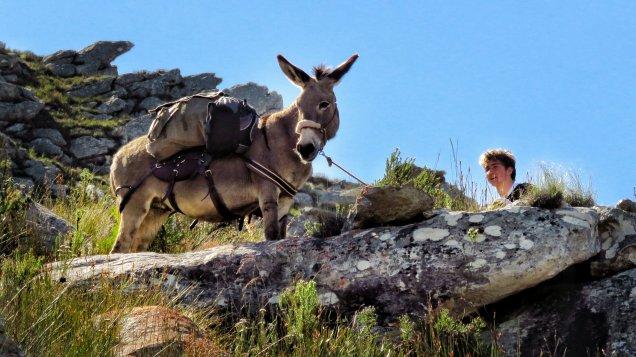 Donkey Rest
